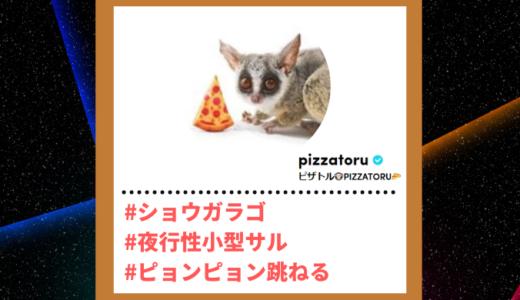 "Tiktoker""ティックトッカー""まとめ【ピザトルPIZZATORU/ショウガラゴ】"