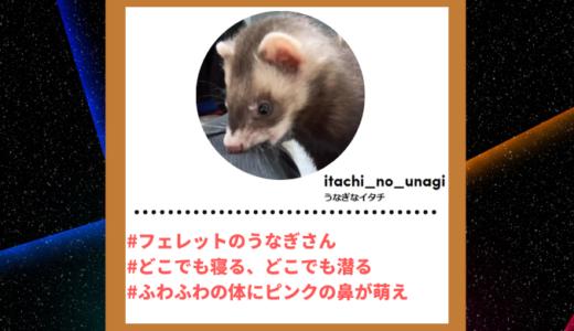 """Tiktoker""""ティックトッカー""""まとめ【うなぎなイタチ/フェレット】"""