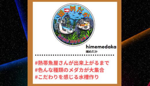 "Tiktoker""ティックトッカー""まとめ【媛めだか/めだか】"