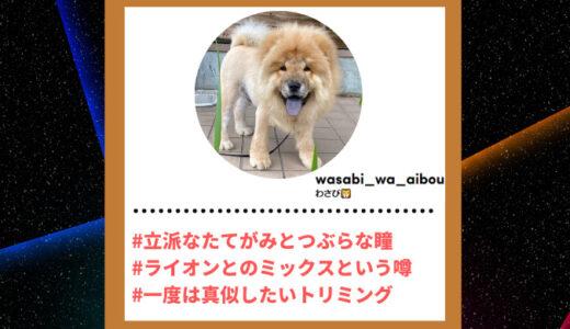 "Tiktoker""ティックトッカー""まとめ【わさび/犬】"