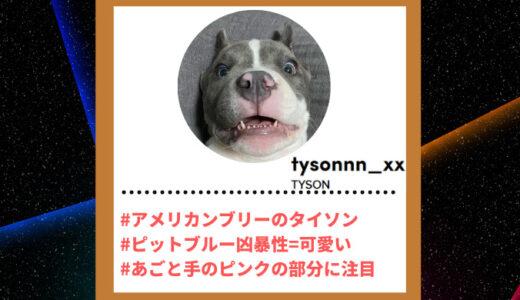 """Tiktoker""""ティックトッカー""""まとめ【TYSON/アメリカンブリー】"""