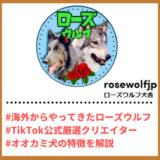 "Tiktoker""ティックトッカー""まとめ【ローズウルフ犬舎/ローズウルフ】"